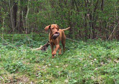Therapiehund Mona bringt ihren Futtersack zurück