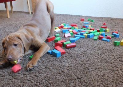 Mona spielen mit Holzklötzchen